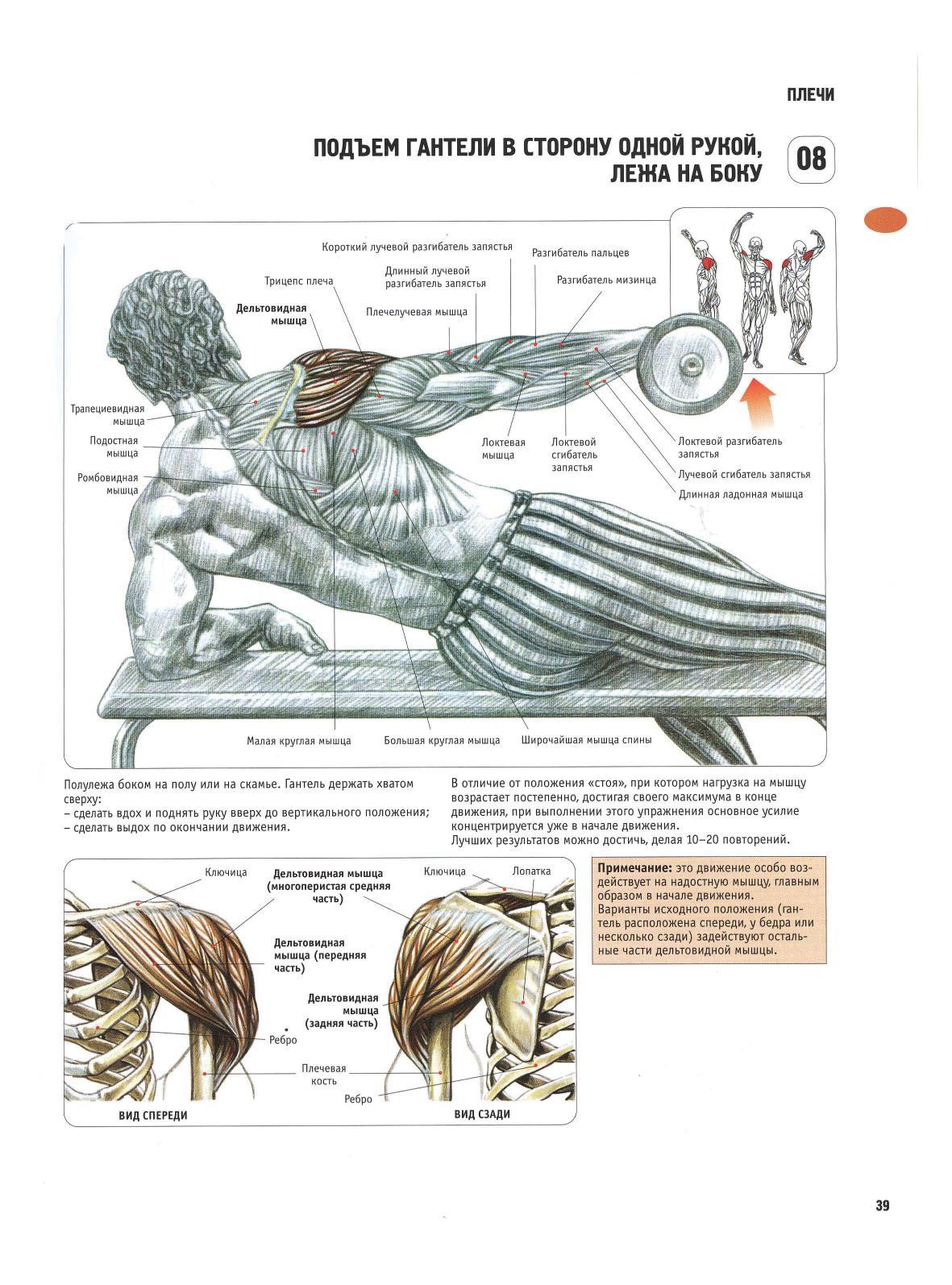 Упражнения на плечевую мышцу в домашних условиях